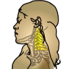 icon_neck